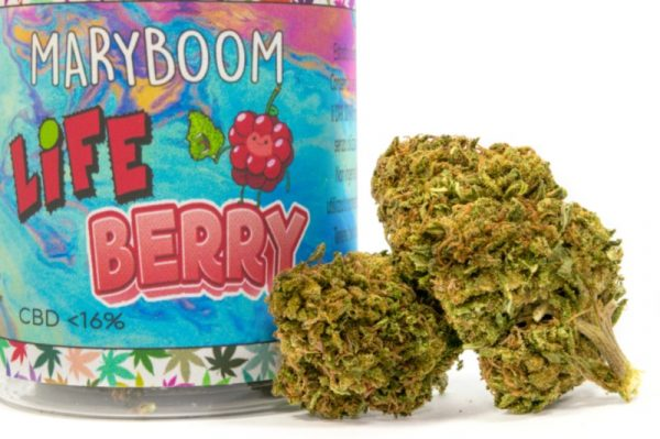 LifeBerry Cannabis Light particolare